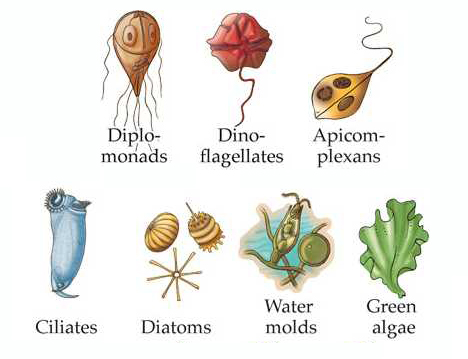 Pathogens In Food. Other fungi are pathogenic,